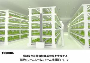 東芝、遊休施設活用し野菜生産を事業化
