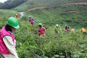 日通、鳥取「日通の森」で夏の森林育成活動