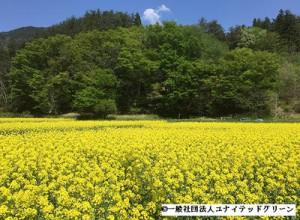 日本郵船が菜の花畑オーナーに、社員ボランティア派遣