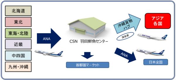 ANAカーゴ、羽田の鮮魚空輸拠点をサポート