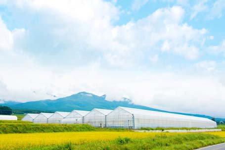 オリックス八ヶ岳農園、葉物野菜年300トン出荷体制整う